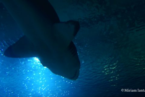 Animali d'acqua: fonte di luce e a rischio estinzione
